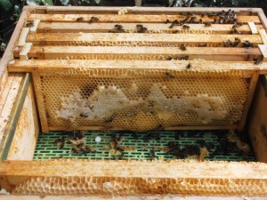 Overwintered honey