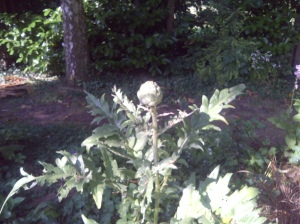 Artichoke Watch!