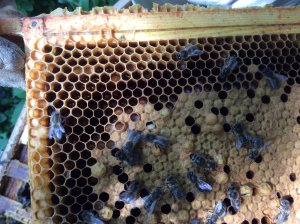 Main Hive: Closer look at first photo