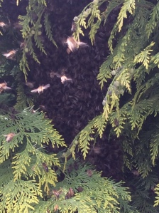 I like this photo. Even though it is unfocused, it feels as if you are flying with the bees into the tree.