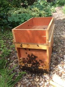 Bees_Swarm5_May05