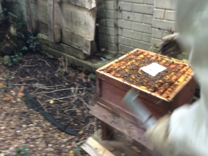 A bit blurry because they did not like the stink, nor did they like the iPad