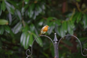 I'll always have a soft spot for the robins...
